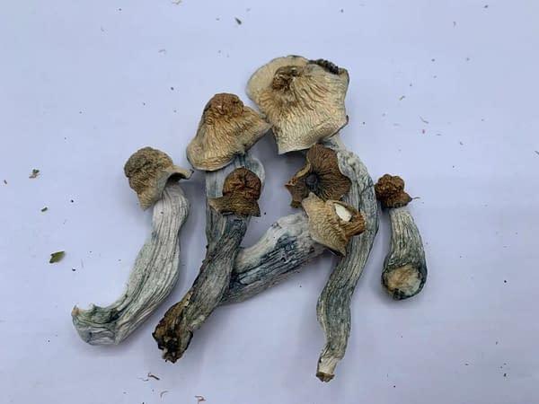 penis-envy6-bcweed-magic-shroom