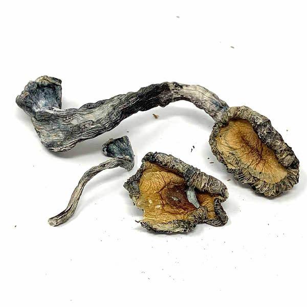 blue-meanies-magic-mushroom-bcweedonline